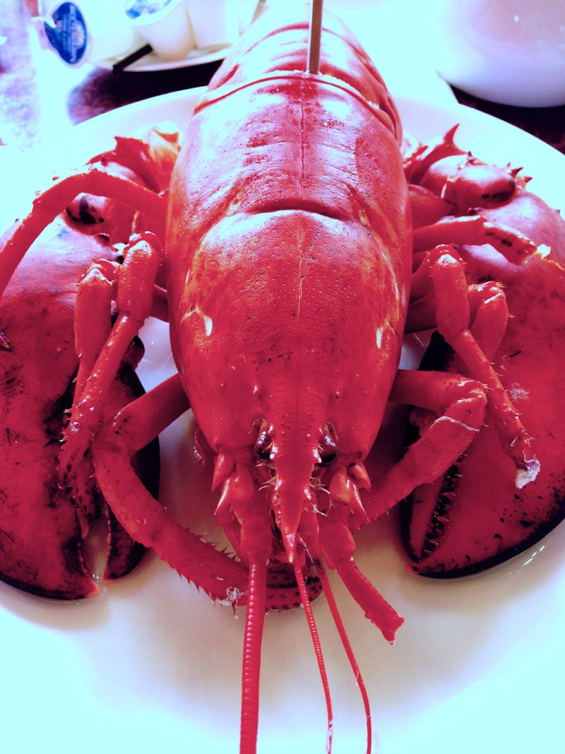 Hall's Bay lobster copy
