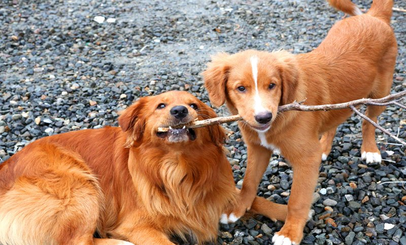 Two cute dogs at Eel Lake Oyster Farms copy